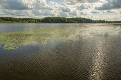 Amazing view of nature landscape. Lake water surface through green plants on front and blue sky with white clouds on background. Gorgeous nature background royalty free stock photography
