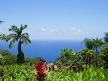 Amazing view from botanical garden on Maui Royalty Free Stock Image