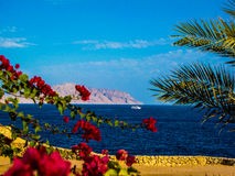 Amazing view on the Red Sea Stock Images