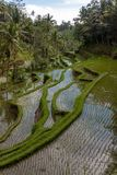 Amazing view of the Rice Terrace field Royalty Free Stock Photo