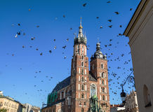 Amazing view of Rynek Glowny, Main Market square in  Krakow. Amazing view of Saint Mary´s Church and birds flying in the Rynek Glowny ,Market Main Square in Royalty Free Stock Image
