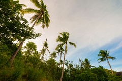 Amazing view of sky with coconut palm trees Stock Photography