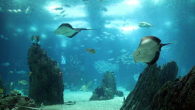 Amazing view underwater aquarium with many fishes stock video