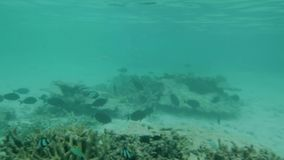 Amazing view of underwater world life. Small fishes and dead coral reefs of Indian Ocean. Snorkeling on Maldives.  stock video footage