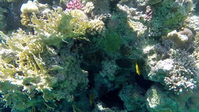 Amazing view of underwater world. Red sea, Egypt stock video