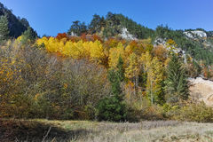 Amazing view of Yellow trees and Autumn view of Buynovsko gorge, Rhodope Mountains Stock Photography