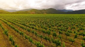 Amazing vineyard rows in Georgia, agriculture, farming business, aerial view. Stock photo royalty free stock image