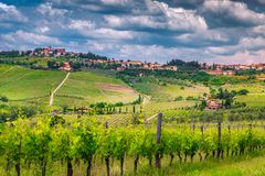 Amazing vineyard with spectacular cityscape, Chianti region, Tuscany, Italy, Europe. Picturesque cityscape with summer green vineyard and cloudy sky, Panzano in royalty free stock photo
