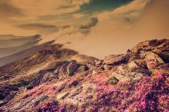 Amazing vintage landscape with flowers Stock Image