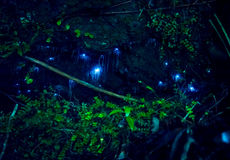 Amazing waitomo Glow worm in Caves, located in New Zealand.  Royalty Free Stock Images