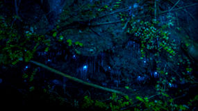 Amazing waitomo Glow worm in Caves, located in New Zealand Royalty Free Stock Images