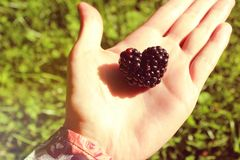 Summer photograph of a hand holding one blackberry in the shape of a heart. Beautiful summer mood background. royalty free stock photo