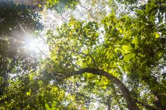 Sunlight through the jungle flora in Periyar National Park, India. This amazing wildlife park is located in Kerala southern state of India. Sprawled over an stock photo