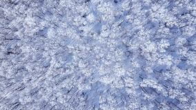 Amazing winter forest. Above the trees tops. Beautiful winter landscape. Very beautiful winter video. Breathtaking winter trees view stock footage