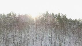 Amazing winter forest sunrise.Beautiful winter landscape. Very beautiful winter sunrise. Above the trees tops. Amazing winter forest sunrise. Above the trees stock video