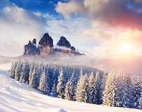Amazing winter in the mountains Royalty Free Stock Image
