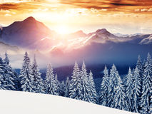 Amazing winter in the mountains Stock Images