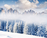 Amazing winter in the mountains Royalty Free Stock Photo