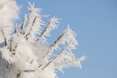 Frozen pine needles with winter rime and frost crystals in sunlight stock image