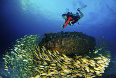 Amazing young scuba diver with fish underwater. Stock Images