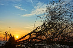 Amazingdry tree trunk in silhouette, sunset summer Stock Image