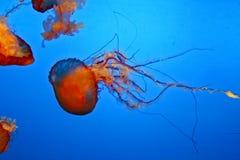 Amazingly beautiful marine organisms Royalty Free Stock Photos