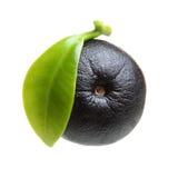 Amazon acai berry fruit with leaf Stock Image