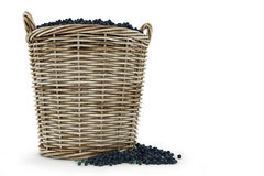 The amazon acai fruit. The amazon acai fruit - Design made in 3D stock illustration