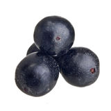 Amazon acai fruit Royalty Free Stock Image