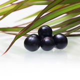 Amazon acai fruit Royalty Free Stock Photo