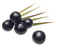 Amazon acai fruit Royalty Free Stock Photos