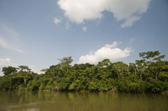 Amazon basin Royalty Free Stock Photo