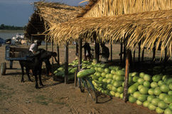 Amazon Basin Royalty Free Stock Images