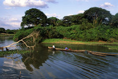 amazon brazil ömarajo Royaltyfri Foto