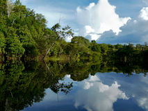 amazon brazil flod Arkivbilder