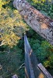 Amazon canopy bridge, Peru. royalty free stock photo