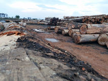 Amazon deforestation. Hundreds of logs taken from the Amazon forest royalty free stock photos