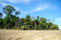 Amazon desflorestation. Desflorestation located at Amazonas Estate, Brazil Stock Photo