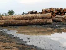 Amazon. Devastation of the Amazon forest royalty free stock image