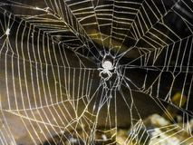 Amazing spider net and nature royalty free stock photo