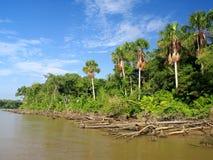 amazon flod Fotografering för Bildbyråer