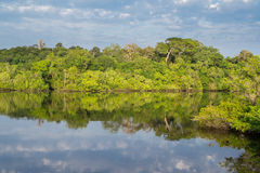 Amazon forest and black river, cloudy sky Royalty Free Stock Photo