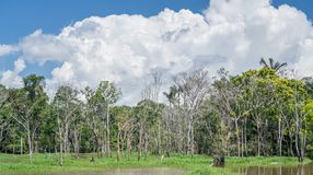 Amazon forest and black river Royalty Free Stock Photo