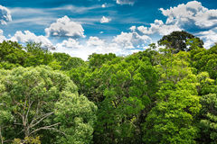 The Amazon forest in Brazil Stock Photos