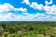 The Amazon forest in Brazil Royalty Free Stock Images