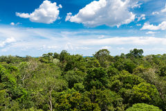 The Amazon forest in Brazil Stock Images