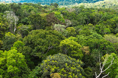 The Amazon forest in Brazil.  Royalty Free Stock Photo
