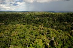 Amazon forest. Amazon rainforest at Urucara city, Amazon Estate, Brazil Stock Photos