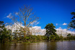 Amazon jungle, amazon river with sunshine and blue sky Royalty Free Stock Photography