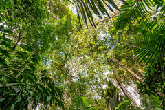 Amazon Jungle Canopy. View of the thick lush green canopy of the Amazon rainforest near Iquitos, Peru royalty free stock images